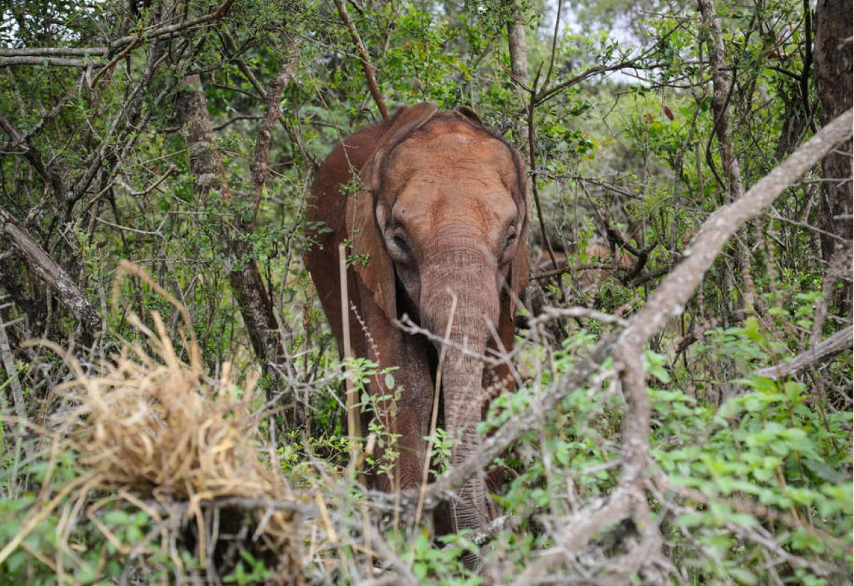 Full Day Sheldrick Wildlife Trust Orphanage & Shopping Tour
