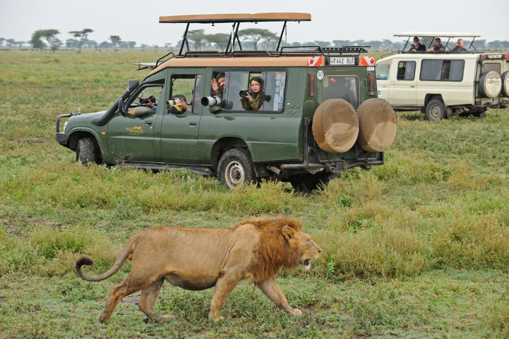 Road Package to Masai Mara