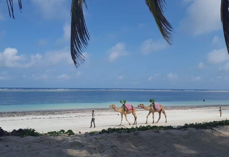 Mombasa & the Marine National Park